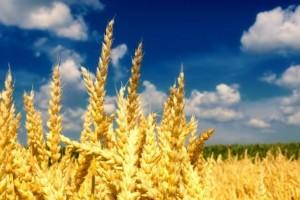 Убийственная поправка: почему аграрии могут потерять 6-12 млрд гривен