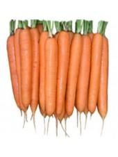 Элеганс F1 - морковь, 100 000 семян (1,8-2,0), Nunhems (Нунемс) Голландия