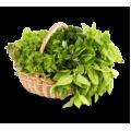 Семена зелени, пряных трав