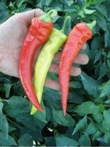 Огнивец - перец острый 1000 семян, Semo Чехия