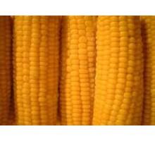 Семена кукурузы Syngenta (Сингента)