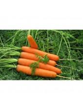 Роял Форто - морковь, 1 кг семян Seminis (Семинис) Голландия