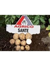 Санте - весовой картофель, 1 кг