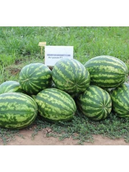 Астрахан F1 - гибрид арбуза, 1000 семян, Syngenta