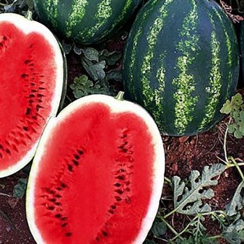 Биант F1 (Эркен F1) - арбуз, 1 000 семян, Yuksel Seed (Юксел Сид) Турция