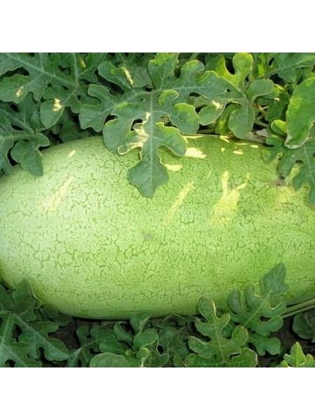 Чарльстон Грей - арбуз, 0,5 кг, Clause Франция