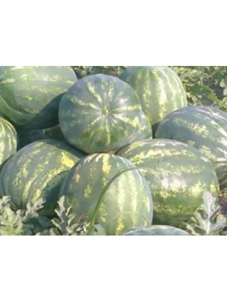 Мисон F1 - арбуз, 1000 семян, Yuksel Tohum