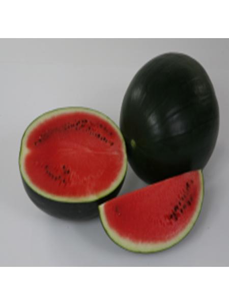Ред Стар F1 - семена арбуза, 1000 семян, Nunhems/Нунемс (Голландия)