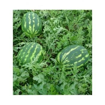 Демре F1 - арбуз, 1000 семян, Yuksel Tohum
