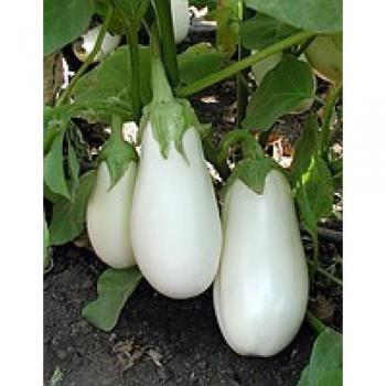 Бибо F1 - семена баклажана, 1000 семян, Seminis/Семинис (Голландия)