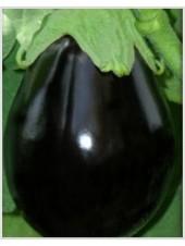 Везир - баклажан, 1000 семян, Yuksel Tohum