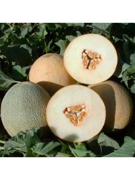 Амалик F1 - дыня, 1000 семян, United Genetics (США)