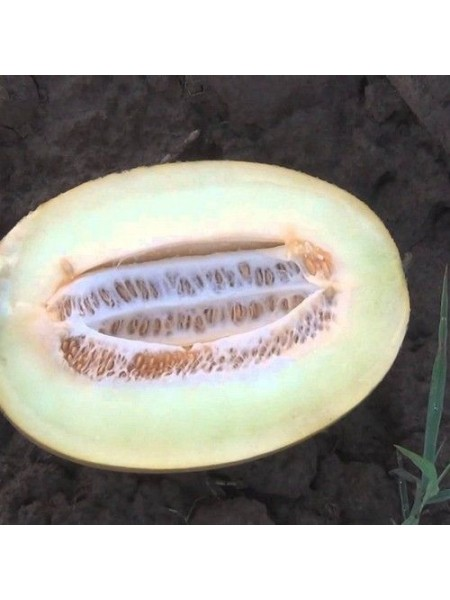 Бабор F1 - дыня, 1000 семян, Clause Франция