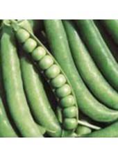Джоф - горох овощной, 100 000 семян, Syngenta (Сингента), Голландия