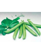 Сомервуд - горох овощной, 100 000 семян, Syngenta (Сингента), Голландия