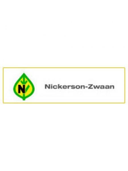 Аниса F1 - кабачок-цуккини, 1000 семян, Nickerson Zwaan