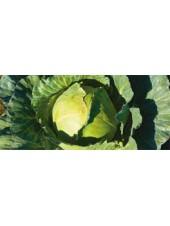 Браксан F1 - капуста белокочанная, 2500 семян, Syngenta