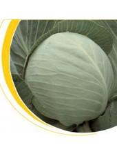 Бузони F1 - капуста белокочанная, 2500 семян калиброванных, Nickerson Zwaan