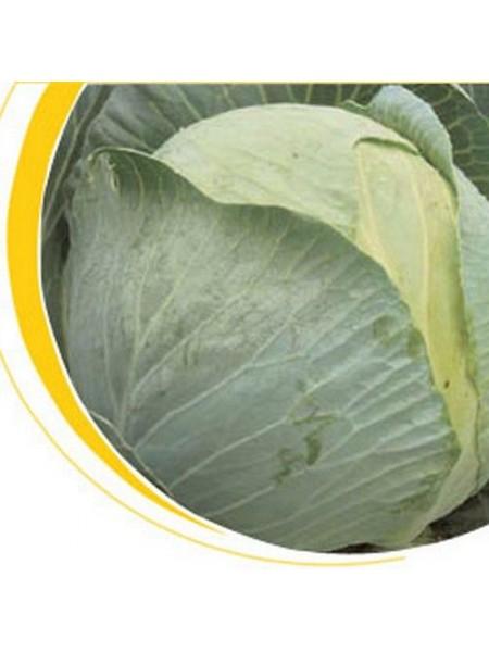 Кастелло F1 - капуста белокочанная, 2500 семян, Nickerson Zwaan