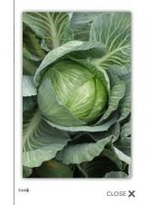Скиф F1 - капуста белокочанная, 10 000 семян, Tezier