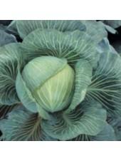 Килатон F1 - капуста белокочанная, 2500 семян, Syngenta (Сингента), Голландия