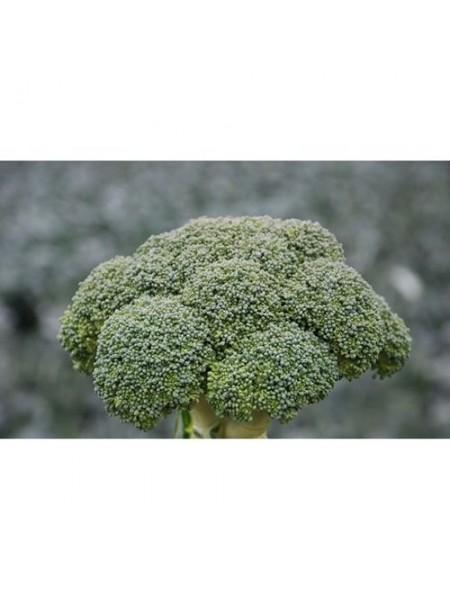 Корос F1 - капуста брокколи, 2500 семян, Clause Франция
