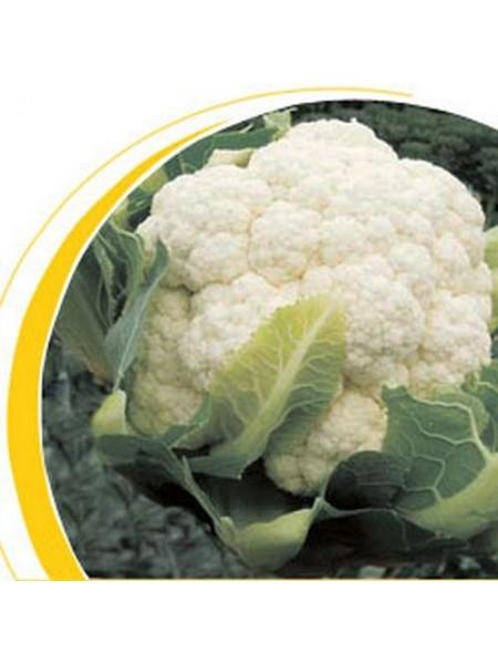 Бодилис F1 - капуста цветная, 1000 семян, Nickerson Zwaan