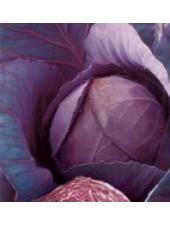 В66-19 F1 - капуста краснокочанная,1000 семян, Tezier (Тезиер) Франция