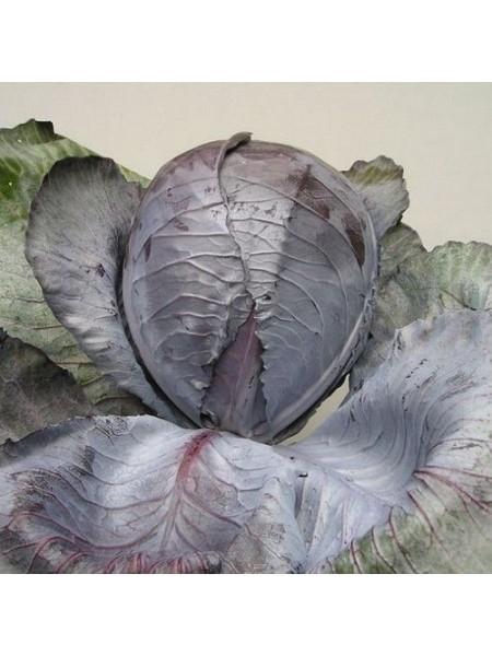 Гаранси F1 - капуста краснокочанная, 1000 семян, Clause Франция