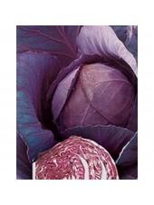 Рубин F1 - капуста краснокочанная, 2500 семян, Tezier (Тезиер) Франция