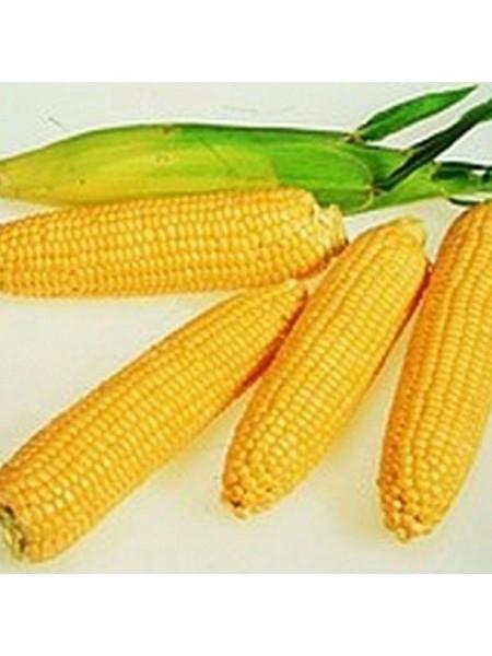 Леженд F1 - кукуруза сахарная, 10 кг, Clause Франция