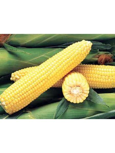 Джубили F1 - кукуруза сахарная, 100 000 семян, Syngenta (Сингента), Голландия