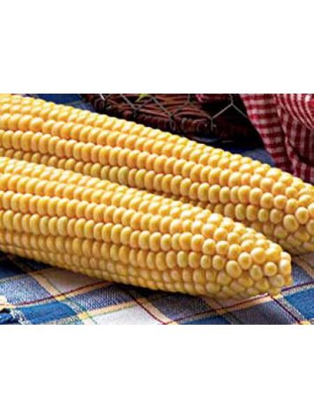 Гаррисон F1 - кукуруза сахарная, 100 000 семян, Syngenta (Сингента), Голландия