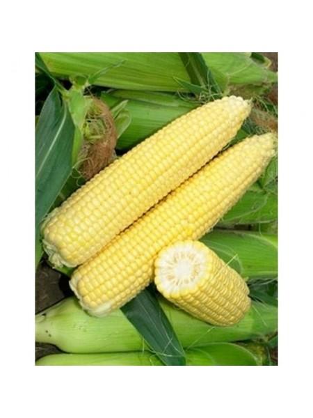 Лендмарк F1 - кукуруза сахарная, 10 кг, Clause Франция