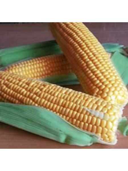 ГСС (GSS) 1477 F1 - кукуруза сахарная, 100 000 семян, Syngenta (Сингента), Голландия
