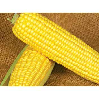 Оверленд F1 - кукуруза сахарная, 100 000 семян, Syngenta (Сингента), Голландия