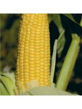 Уокер F1 - кукуруза сахарная, 2500 сем, (Lark Seeds)