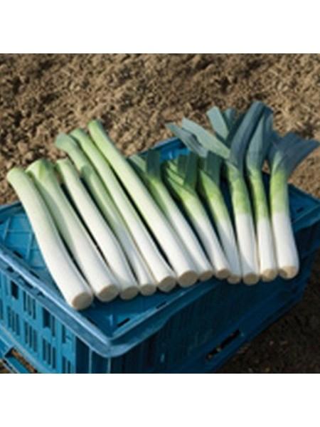 Бандит - лук порей, 10 000 семян, Bejo/Бейо (Голландия)