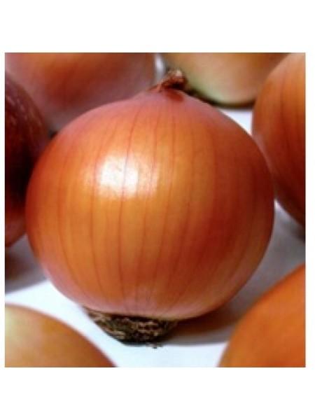Бонус F1 - лук репчатый, 250 000 семян,Takii Seed Япония