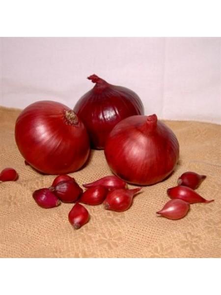 Севок (арпаш) - лук красный, 10 кг
