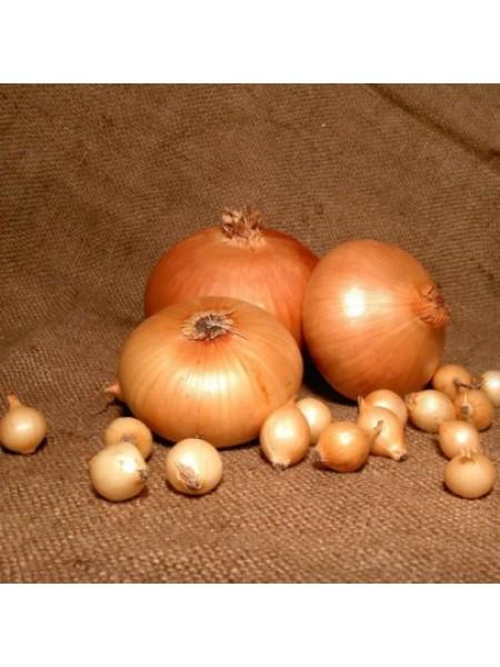 Севок Штуттгартен (арпаш) - желтый круглый, 10 кг Голландия