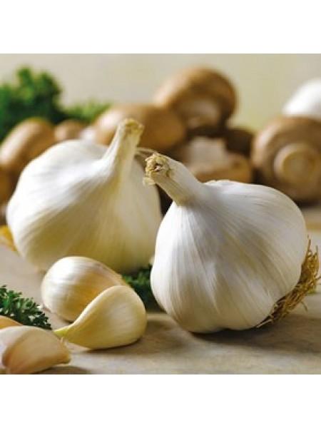 Севок (арпаш) - чеснок белый, 10 кг