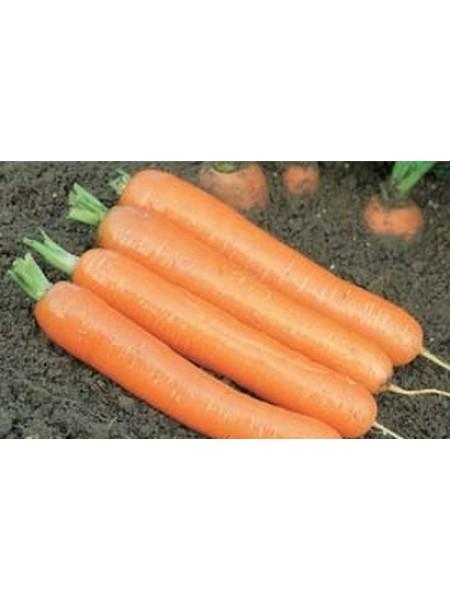 Дордонь F1 - морковь, 50 000 семян, фракция 1,6+ мм, Syngenta (Сингента), Голландия