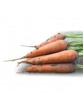 КС 7 F1 - морковь, 10 000 семян, Kitano (Китано), Япония