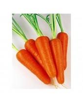 Абако F1 - морковь (2,0 - и более), 200 000 семян, Seminis Голландия