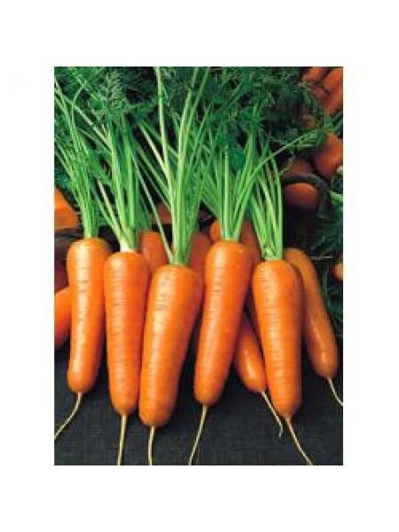 Шантане РэдКор - морковь, 500 грамм, United Genetics