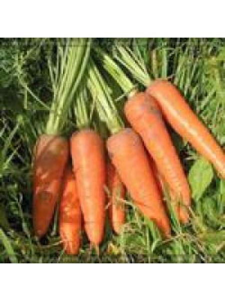 Курода Шантане - морковь, 500 грамм, United Genetics (США)