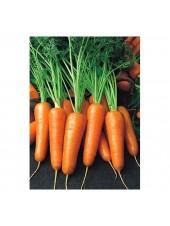 Роял Шансон - морковь, 1 кг семян, Seminis (Семинис) Голландия