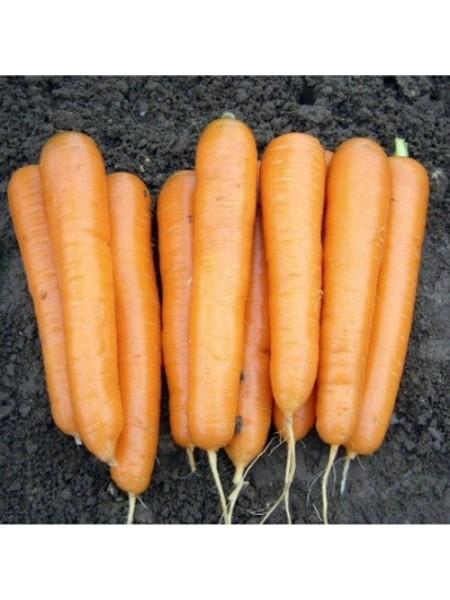 Аттилио F1 - морковь, калибр 100 000 семян, Nickerson Zwaan