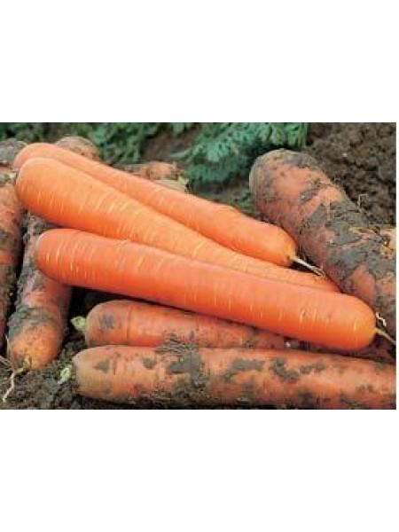 Чемпион F1 - морковь, 100 000 семян, Syngenta (Сингента), Голландия